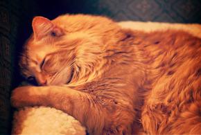 temps sieste courte ou longue