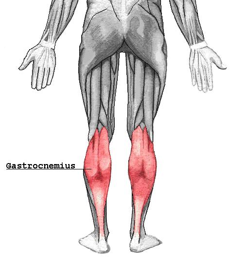 Gastrocnemius triceps sural